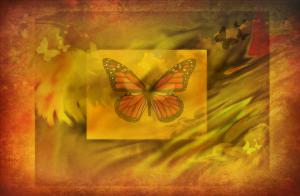 Butterfly Dreams 5sherri nicholas 4600x3000