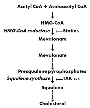 How cholesterol is made from http://www.gbhealthwatch.com/images/cholesterol_fig4.jpg